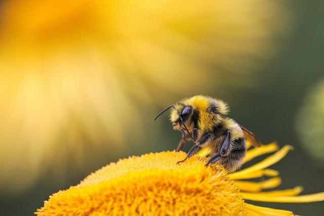 刺され 夢 に 占い た 蜂